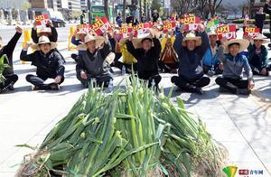 """韩国大葱变身""""向钱葱""""身价倍增 农民围大葱静坐示威"""