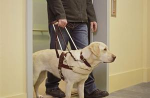 """盲人歌手带导盲犬入住酒店接连被拒!酒店把盲人""""眼睛""""视作一般宠物,这样好吗?"""