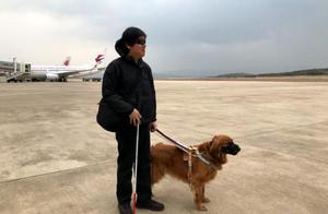"""周云蓬携导盲犬入住酒店被拒,有专家释法称""""酒店是不对的"""""""