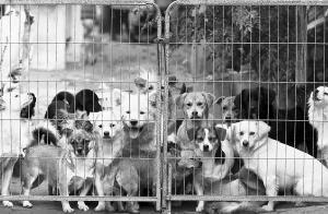 流浪狗救助站遭投毒 三只狗死亡