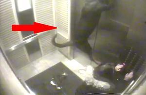 带着狗狗搭电梯要小心,千万不要发生这样的悲剧!