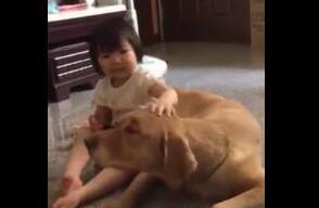 狗狗偷吃红薯被发现,被妈妈训斥,结果小主人为它却对妈妈这样做