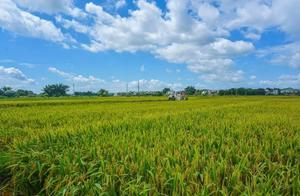 梅州单造亩产832.1公斤!袁隆平超级稻打破双季早稻产量世界纪录