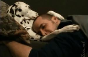 家里有这样一只狗真幸福!还会哄主人睡觉!