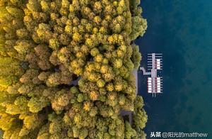 杭州西湖,蓝天碧水,湖光山色,金黄色的梧桐和水杉美不胜收