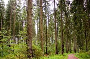 研究称中国植树造林碳吸收作用被低估了