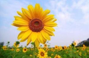 生活需要励志!累了依然坚持,哭也微笑面对。看完你就豁然开朗