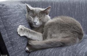 辟谣:猫咪有双重性格吗?别再误会猫咪了,一篇文章解释给你听