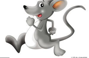 12生肖为什么没有猫?猫和老鼠仇怨传千年,原因在这儿