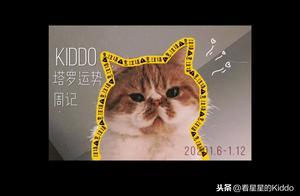 Kiddo塔罗运势周记丨2020.1.6~1.12