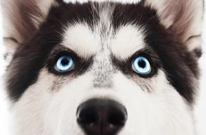狗狗的肢体语言很丰富,读懂狗狗情绪才能更好地照顾它们