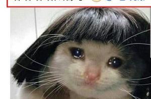 钟晓芹流泪猫猫头,毛晓彤发文疑惑,网友肯定:猫猫头本毛了