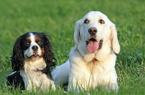 狗狗这5种行为,其实是在保护主人,你家汪中了吗?