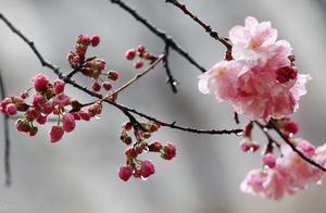 生活记录   春雨淅沥 明日除夕