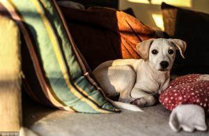 """掌握狗狗这7种常见肢体语言,你也能成""""读狗专家"""""""