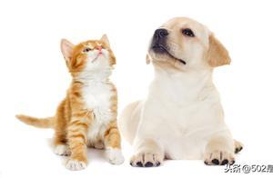 """有个上海的朋友问我:""""感到孤独,养宠物真的有用吗?"""""""
