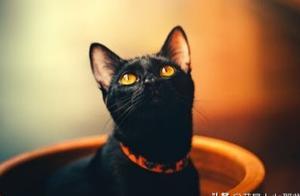 辟谣!谁说猫咪就应该宅在家?铲屎官应带它适度运动
