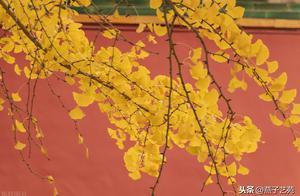 故宫的秋,好美
