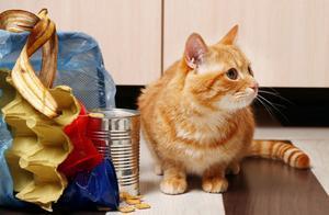 猫咪为什么喜欢翻垃圾桶?我们该如何纠正它们这个不良的习惯?