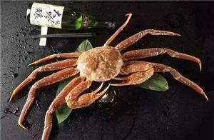 """一只蟹12.2万元?日本鸟取县顶级""""五辉星""""松叶蟹拍卖再创天价!"""