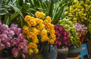 有院子,这些一次性的年宵花开败别扔,埋到院子里,能省不少钱