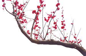 电竞诗人王多多语录你知道出自哪里吗