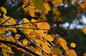 《故都的秋》:写给旧中国的悲凉颂歌
