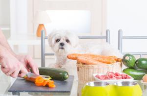 对狗狗来说,这8种食物,是它的最爱