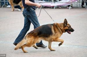 男子小区内遛大狗遇查,态度猖狂抱摔警察被拘留