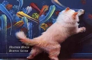 不怕宠物会卖萌,就怕宠物会画画,这年头没有点才艺都不敢出来混