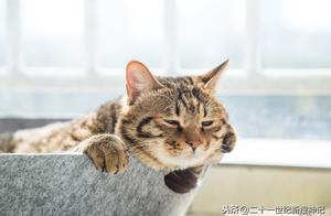 生肖之谜(三)第十一个天干与第十三个地支,猫为何没进十二生肖