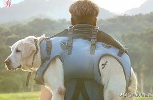 扎心了!这只导盲犬和主人的故事看哭全场,任达华奉献影帝级演技