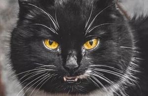 摄影师为流浪猫拍摄肖像,捕捉了这种无畏猫科动物的独特美