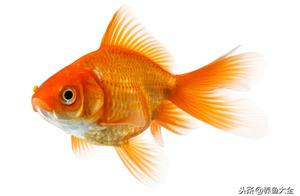 养殖金鱼的换水方法