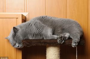 怎么引导猫咪不咬人、不咬电线?3招解决问题