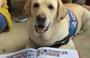 14只狗狗拍毕业照,和毕业生一个待遇,老师:它们值得!