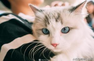 朋友让我照顾一只猫咪,我带它出去散步遛弯,结果猫咪当场猝死