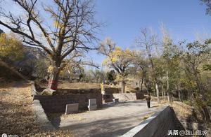 济南深秋探访北道沟村,这里有一座普门寺遗址 千年银杏树