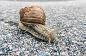 原来蜗牛是从蛋里生出来的