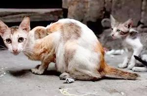 铲屎官给猫咪开电暖,不慎将猫毛烤焦,三种处理方法让猫咪更安全
