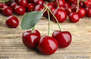 2019年种植樱桃赚钱吗 种10亩樱桃能赚多少钱