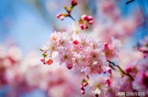 宅在家也可以感受春天的诗意