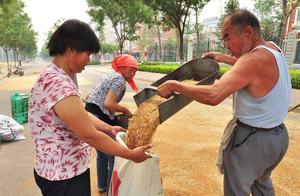 小麦已收获,储存时容易生虫和发霉,该怎么做能避免?