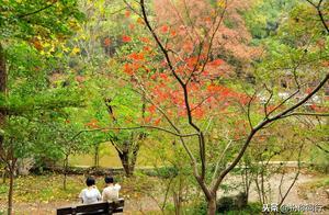 栖霞山作为中国赏枫胜地之一,陪游网带你亭中小憩赏遍山红叶