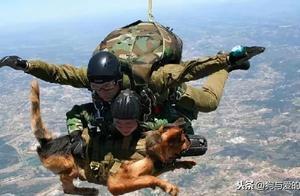空降犬高空跳伞全程淡定……网友:这是啸天犬