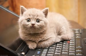 开水烫死怀孕母猫,这是什么样的心理问题?