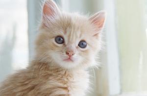 如何有效避免猫咪翻垃圾桶呢?网友给出了不错的答案!
