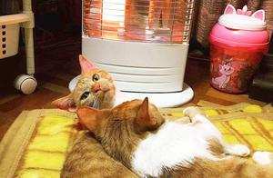 猫毛那么厚,猫咪还会怕冷?是的,猫也怕冷,并且需要保暖
