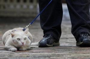 """澳大利亚珀斯或引入""""猫咪宵禁令""""让猫主子独自出门也犯法"""