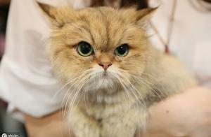 """猫不能化妆不能美颜,想让猫变得""""貌美"""",需要从这几方面下手"""